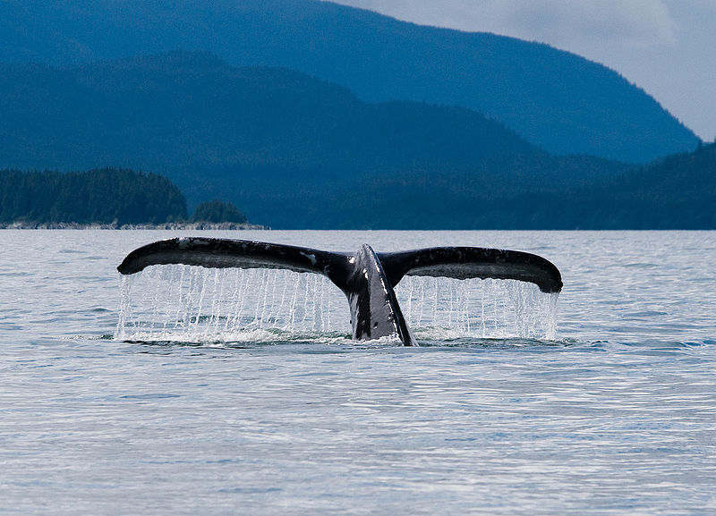Mixed Results from the International Whaling Commission